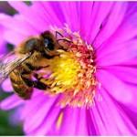 Cosmétique issu de la ruche